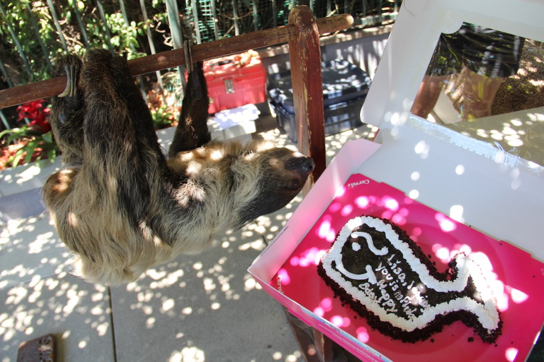 sloth_cake