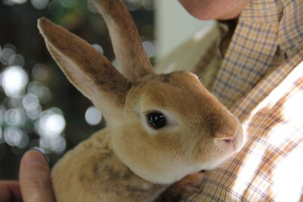 soft_rabbit_2