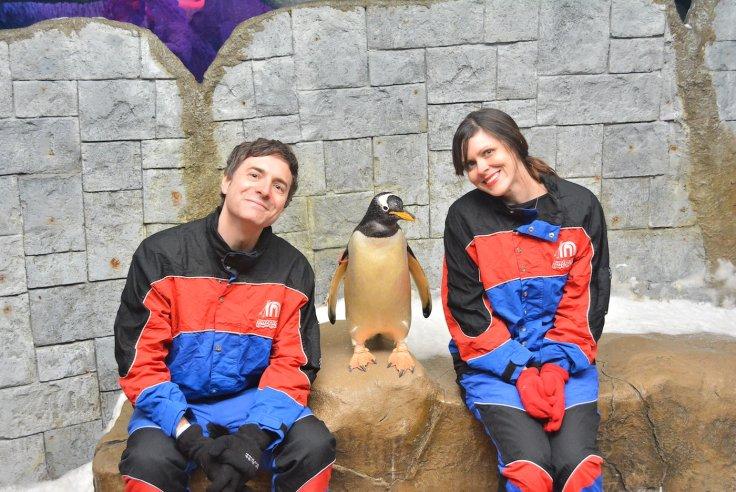 dubai_gentoo_penguin2
