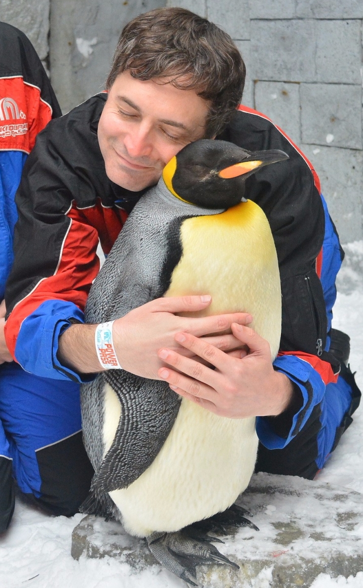 dubai_penguin_hug_3
