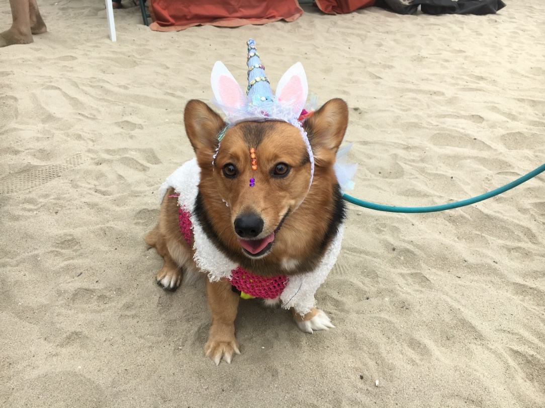 corgi_beach_day_11