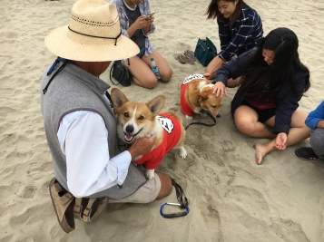 corgi_beach_day_18