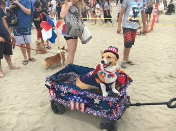 corgi_beach_day_2