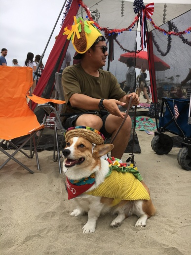 corgi_beach_day_28