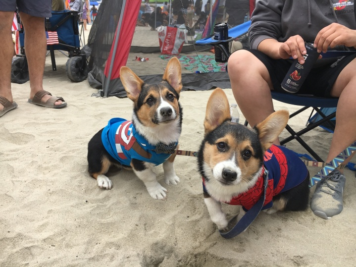 corgi_beach_day_29