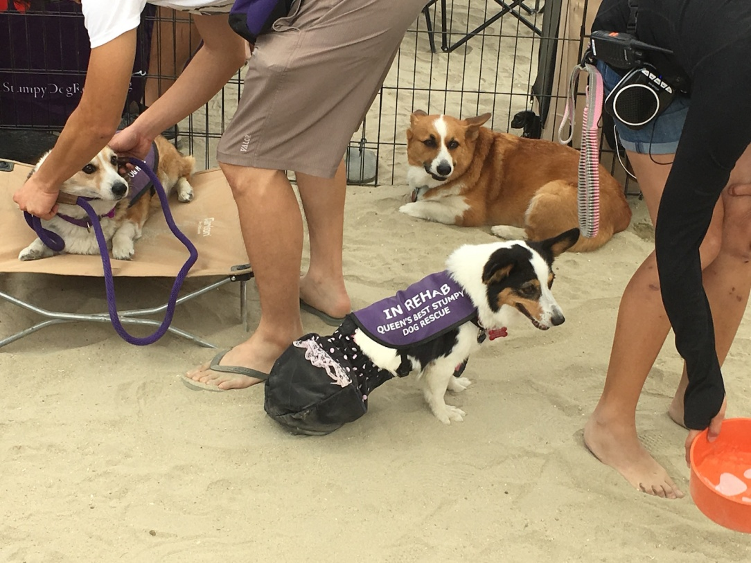 corgi_beach_day_33