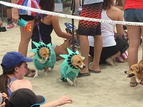 corgi_beach_day_36