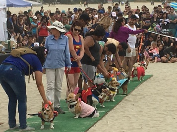 corgi_beach_day_37