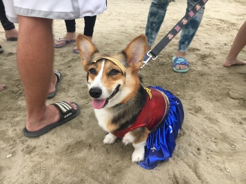 corgi_beach_day_38
