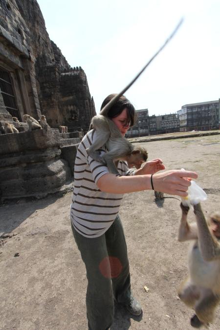 Lopburi_Monkeys_31
