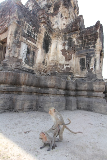 Lopburi_Monkeys_47