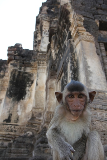 Lopburi_Monkeys_49