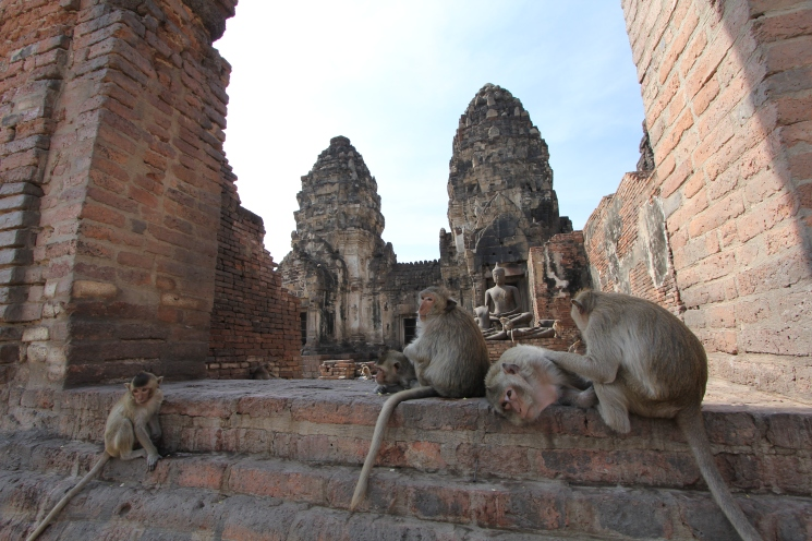 Lopburi_Monkeys_51