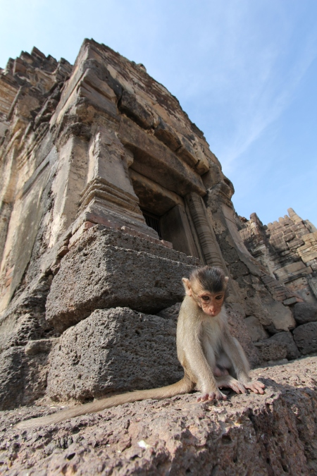 Lopburi_Monkeys_63