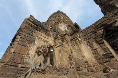 Lopburi_Monkeys_91