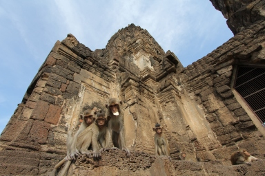 Lopburi_Monkeys_91