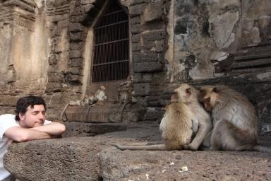 Lopburi_Monkeys_94