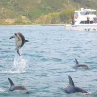 Swimming With 400 Dolphins In New Zealand
