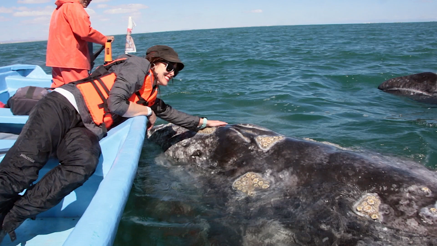 There's A Place in Baja, Mexico Where You Can PET WHALES!